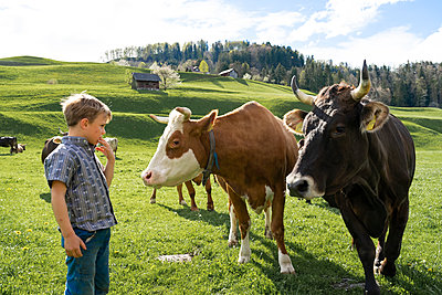 Boy looking at cows on pasture - p300m2114206 by Francesco Buttitta