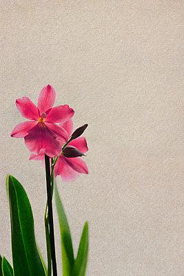 Orchidee - p450m955585 von Hanka Steidle