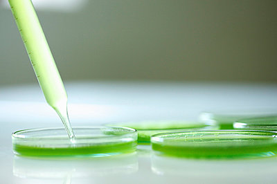 Pipette and Petri Dishes with Green Solution - p669m824014 by Jutta Klee photography