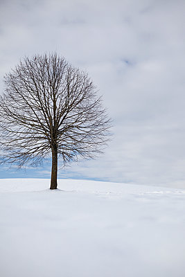 Winter landscape - p1149m1043181 by Yvonne Röder