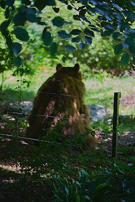 Bär im Zoo - p1164m1057996 von Uwe Schinkel