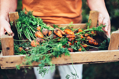 Woman harvesting carrots from backyard garden - p1166m2232517 by Cavan Images