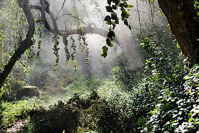 Old forest - p226m924644 by Sven Görlich