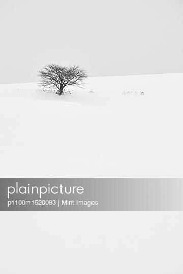 p1100m1520093 von Mint Images