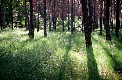 im Wald - p1710009 von Rolau