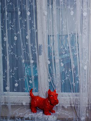 Roter Hund mit grünen Augen - p1279m1134673 von Ulrike Piringer