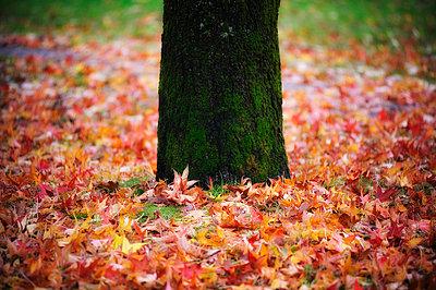 Herbst - p8290264 von Régis Domergue
