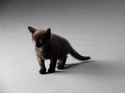 Schwarzes Kätzchen - p9010014 von St. Fengler