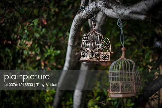 Open bird cages hanging in a tree - p1007m1216533 by Tilby Vattard