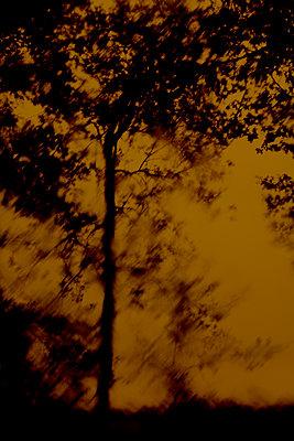View of downpour through car windscreen - p1028m1589846 von Jean Marmeisse