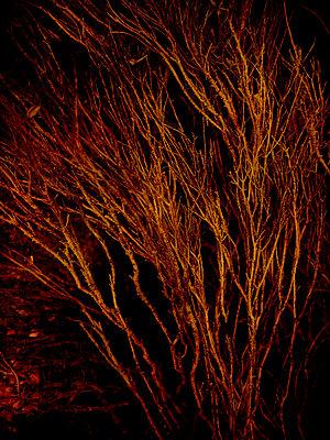 Bush at night - p1028m2231339 by Jean Marmeisse