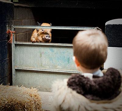 Junge und Schwein - p600m764057 von Laura Stevens