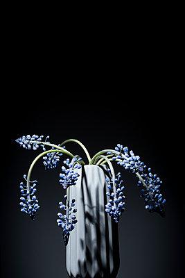Hyacinths - p1149m1208342 by Yvonne Röder