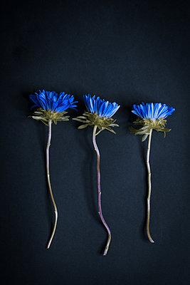 Blue flowers - p1623m2215480 by Donatella Loi