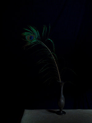 Peacock feather - p444m1041384 by Müggenburg