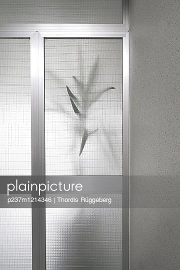 Palme hinter Glas - p237m1214346 von Thordis Rüggeberg