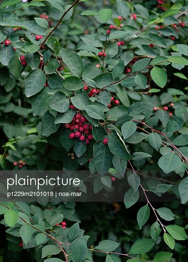 Wild berries - p1229m2101018 by noa-mar