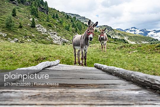 p713m2122589 by Florian Kresse