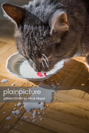 Katzenmilch - p954m1516614 von Heidi Mayer