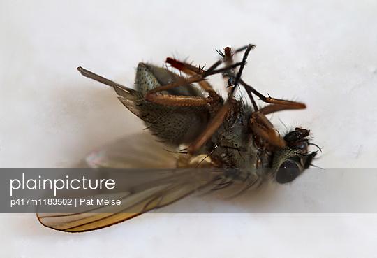 Fliege - p417m1183502 von Pat Meise