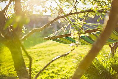 Hammock hanging in sunny tranquil garden - p1023m2201157 by Martin Barraud