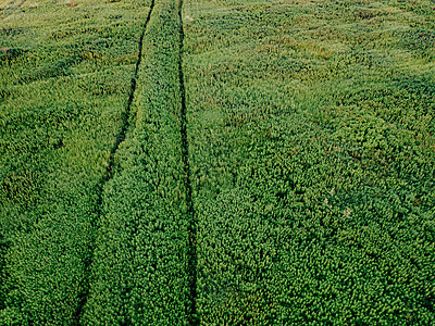 Aerial view of plants growing on agricultural field - p1166m2025346 by Cavan Images