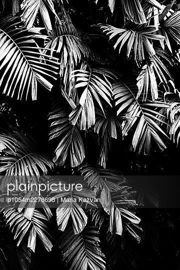 Tropical leaves - p1054m2278698 by Maria Kazvan