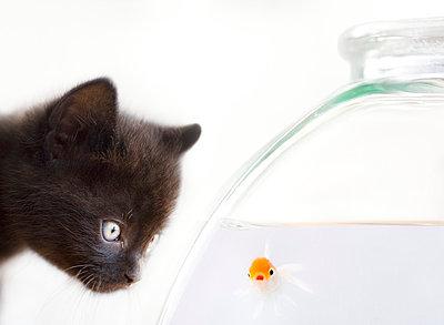 Neugierig am Fischglas - p4425530f von Design Pics