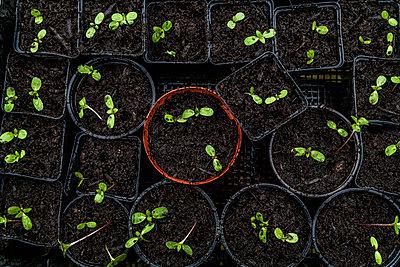 Seedlings - p867m1051262 by Thomas Degen
