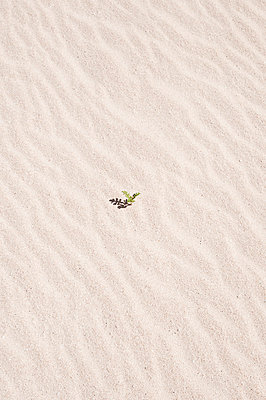 Single plant in the sand - p6460169 by gio