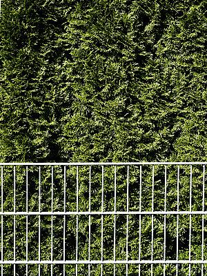 Hecke hinter einem Metallzaun - p318m1477381 von Christoph Eberle