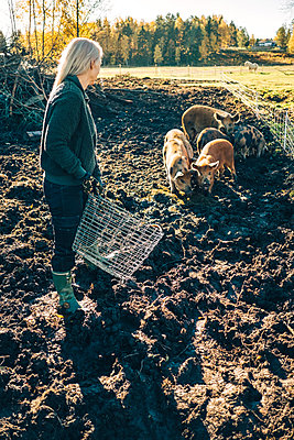 Full length of mature female farmer with basket looking at pigs grazing on organic farm - p426m1537114 by Maskot
