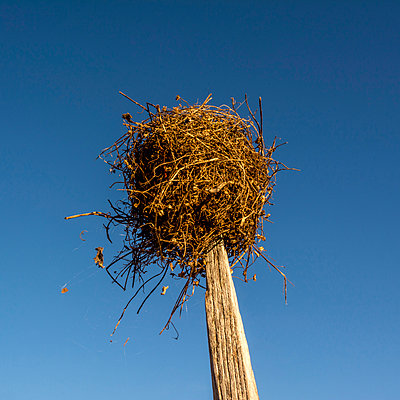 Bird's nest atop a wooden post - p813m1109362 by B.Jaubert