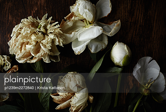 Withering flowers - p1239m2272840 by Krista Keltanen