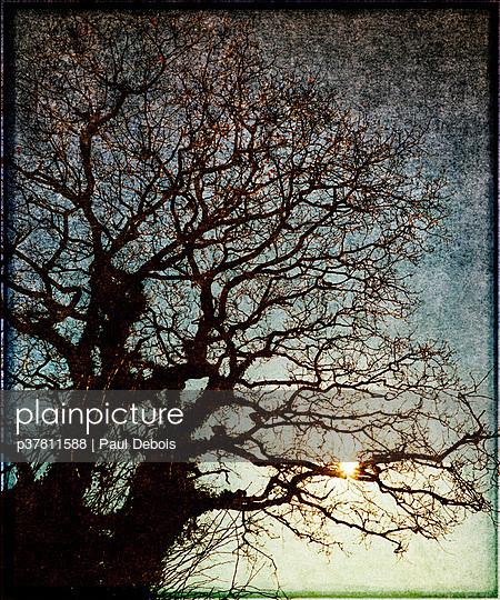 Oak tree in winter - p37811588 by Paul Debois