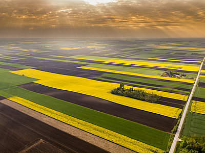 Serbia. Agricultural fields with yellow rape field, aerial view at summer - p300m1568346 by oticki