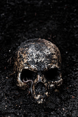 Skull in wet soil with earthworm - p300m2219383 by Miriam Dörr