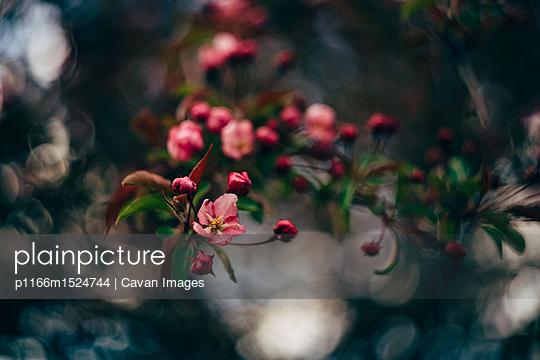 p1166m1524744 von Cavan Images