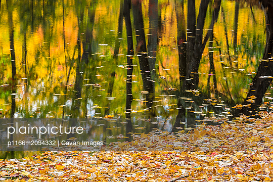 Fall colors reflect in a river in Maine - p1166m2094332 by Cavan Images
