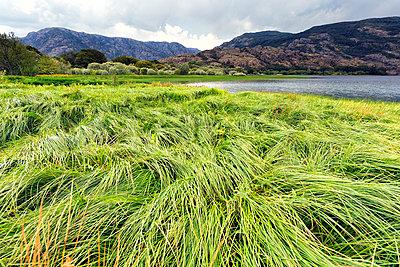 Spain, Zamora Province, Sanabria Lake Natural Park - p300m2079220 von David Santiago Garcia
