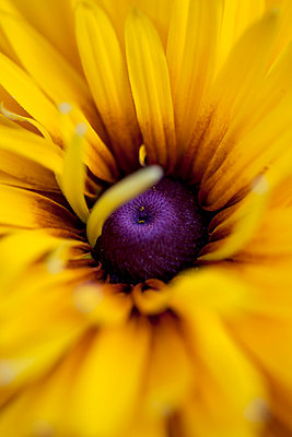 Yellow flower - p4450876 by Marie Docher