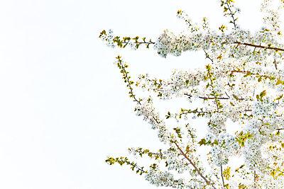 p9241649 von Janeycakes Photos