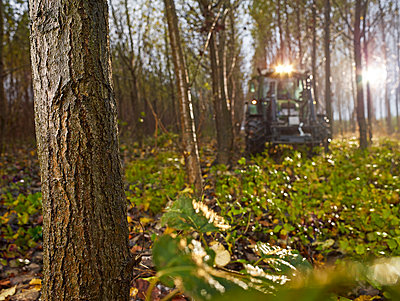 Tractor in a rainy forest, Kolsass, Tyrol, Austria - p300m2131827 by Christian Vorhofer