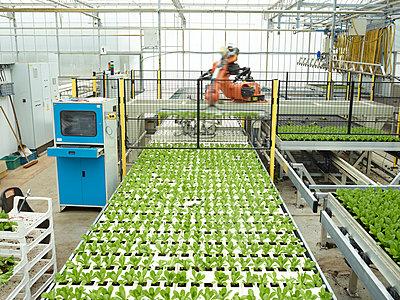 Monoculture - p1188m1002835 by Henk Wildschut