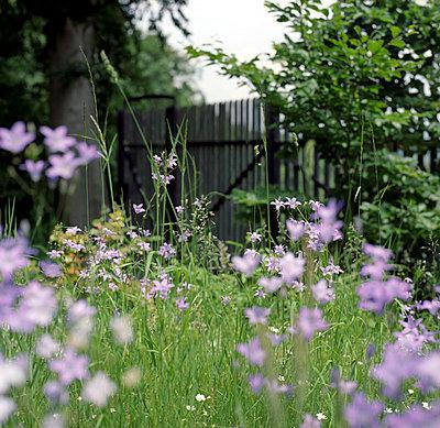Picket Fence - p4410274 by Maria Dorner