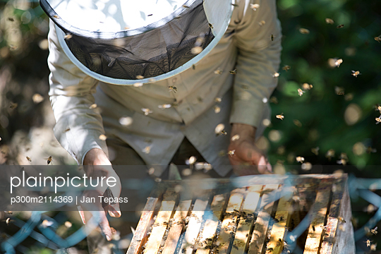 Beekeeper checking honeycomb with honeybees - p300m2114369 von Jan Tepass