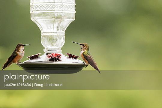 p442m1216434 von Doug Lindstrand