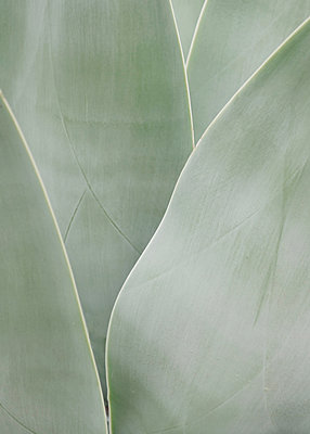 Agave - p1677m2258945 by nina e. reiter
