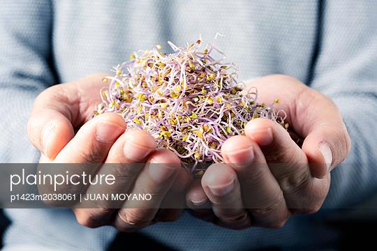 Kohlsprossen - p1423m2038061 von JUAN MOYANO