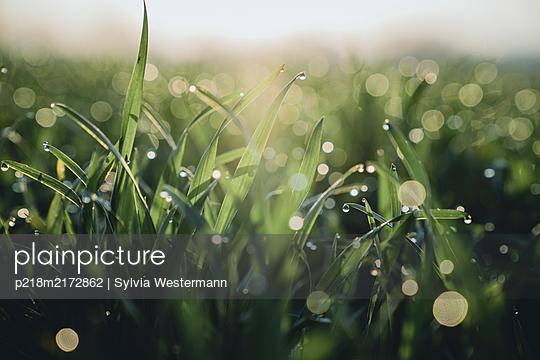 p218m2172862 by Sylvia Westermann